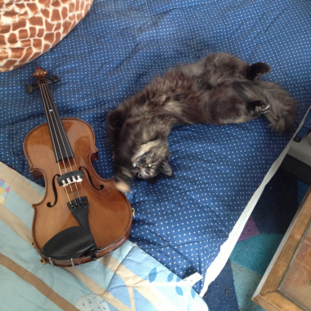 Violin+playmate.png