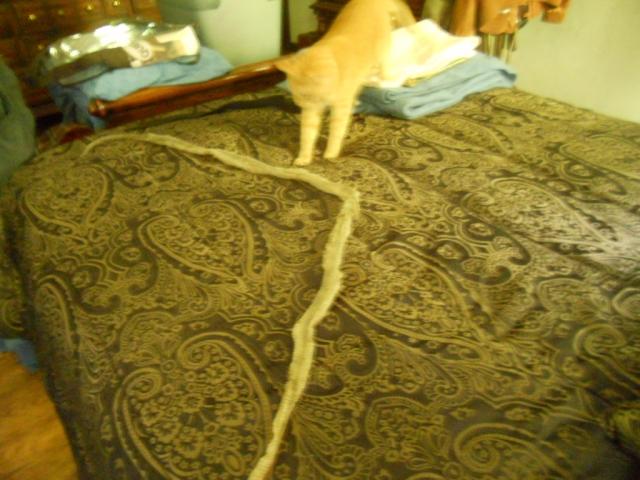 snake-013.JPG