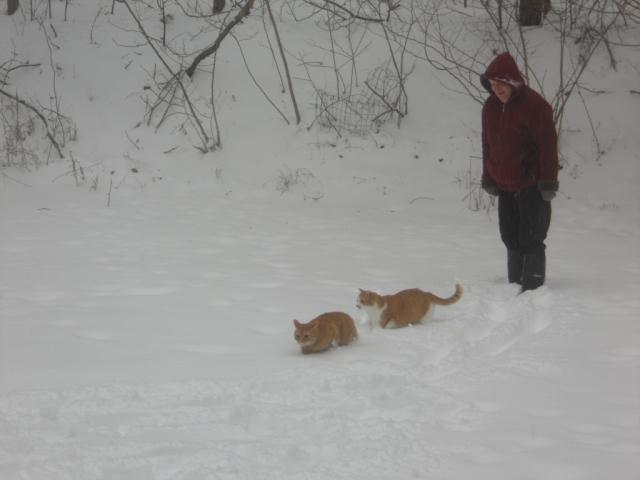 cats-010.JPG
