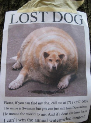 funny-picture-lost-dog.jpg