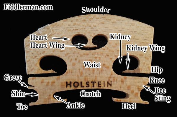 The Composition of a Violin Bridge.